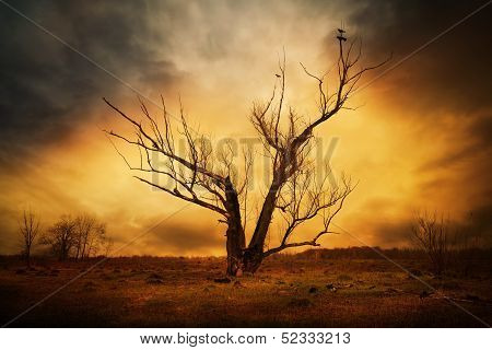 Dry Tree And Crows On The Branches