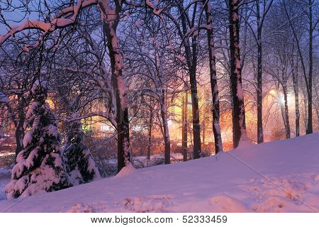 Snow On Trees And City Lights