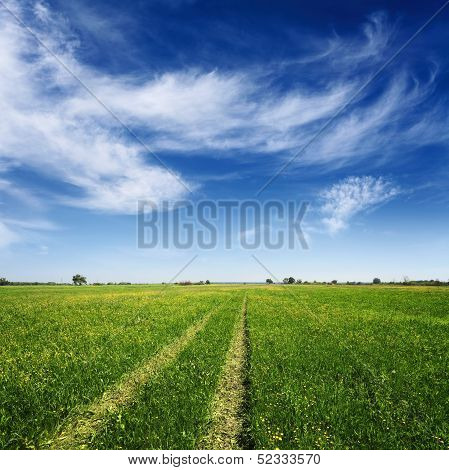 Summer Field With Tracks Of Car On Grass