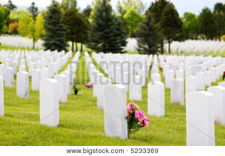 Military Cemetery Headstones & Flowers