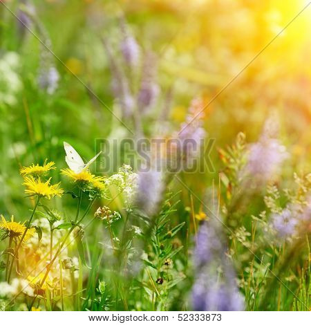 Butterfly On Field Flowers And Sun