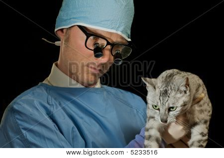 Veterinarian Examines Cat
