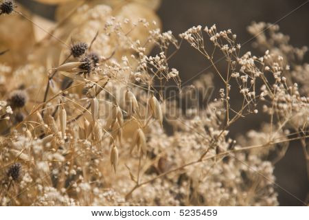 Bunch of dry plants