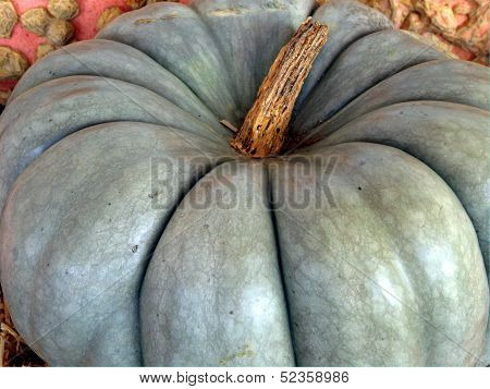 White Pumpkin