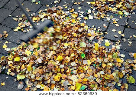 Seeping Up Autumn Leaves