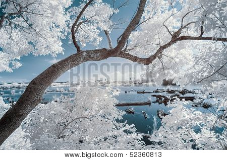 Landscape of forest and the pond, infrared photography.