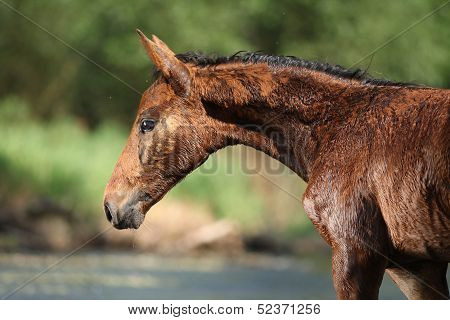 Nice Brown Foal First Time In The Wather