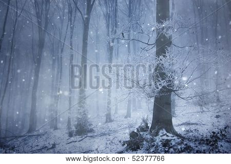 Blizzard and snow in a forest with fog in winter