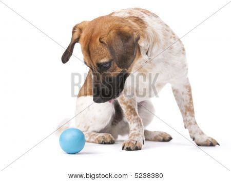 Little Dog With Blue Ball