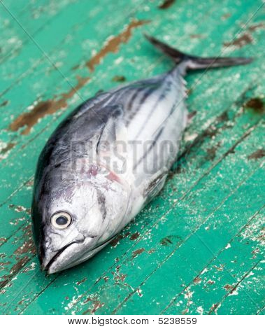 Tunafish On Deck Of A Fishing Boat