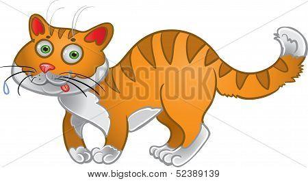Orange fun cat