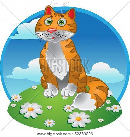 Orange funny sitting cat on color background