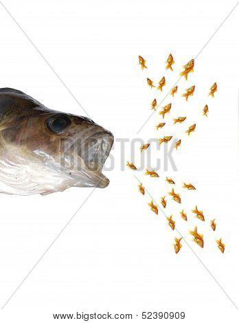 Predatory Fish