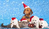 stock photo of puppy kitten  - dog and cat and kitens wearing a santa hat - JPG