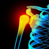 stock photo of humerus  - Shoulder  - JPG