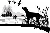picture of duck-hunting  - Dogs of a duck hunting the nature - JPG