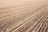 stock photo of cultivator-harrow  - Background of newly plowed field ready for new crops. Ploughed field in autumn. Farm agricultural background