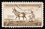 Antelope 1956
