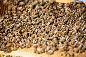 foto of bee keeping  - Selective focus of bees swarming on a honeycomb - JPG