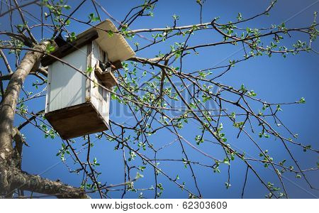 spring starling in a tree house