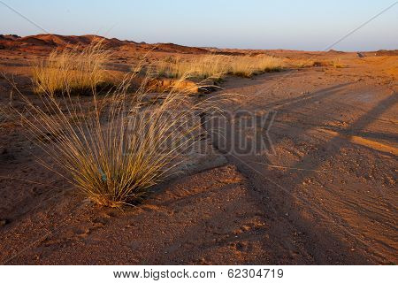 Exotic scenery in Gobi Desert