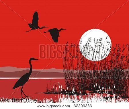 Herons on shore