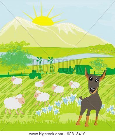 Sheeps And Dog
