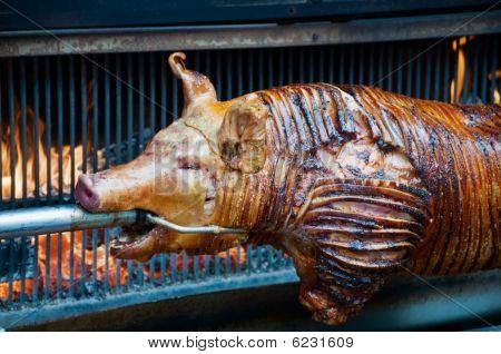 Sucking Pig