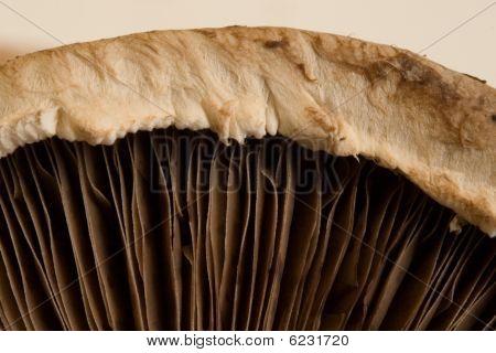 Macro Mushroom Image