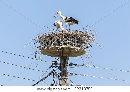 Two White Storks In The Nest On The Elektrical Pole Blue Sky (ciconia)