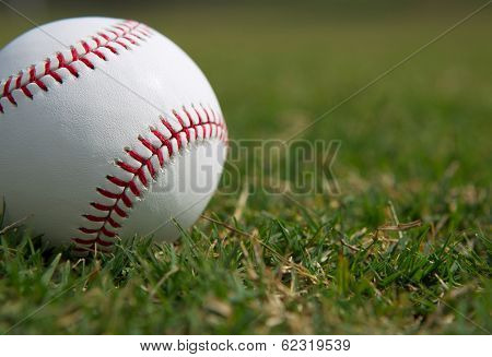 New Baseball Close Up in the Outfield Grass with room for Copy
