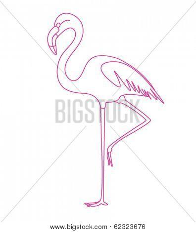 flamingo tropic bird