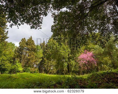 Mon Repos park, Corfu Town, Greece