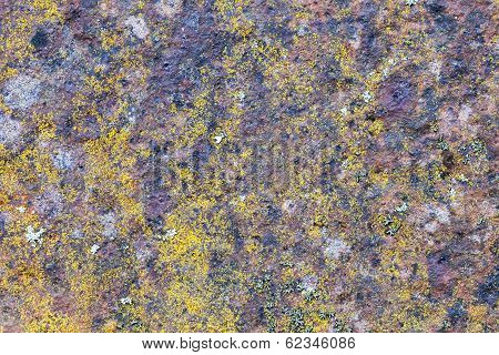 Old Rusted Metal Surface With Small Yellow Mold