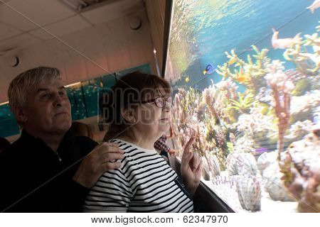 Happy Couple Looking At Fishes