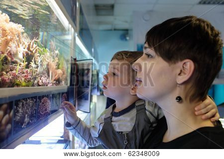 Mother With Son Watching Fishes