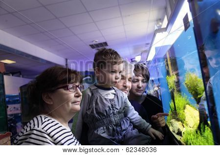 People Looking At Fishes
