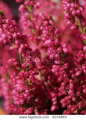 Magenta floral background
