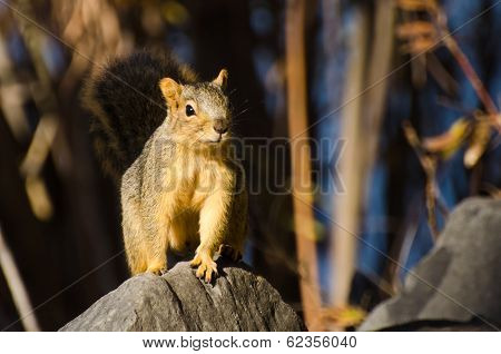 Frisky Squirrel Resting On A Rock