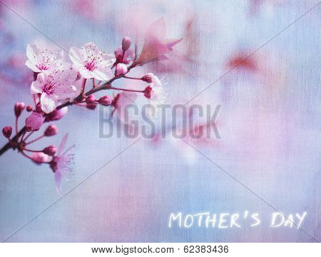 Mother's day greeting card, beautiful floral textured background, fresh gentle cherry tree blossom, greeting card for mother's day, spring season, beauty of nature concept