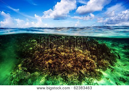 Beautiful coral garden underwater, diving on Maldives, blue cloudy sky, turquoise water, luxury summer vacation, beauty of wild nature