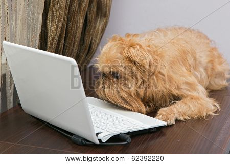 Dog And A Laptop