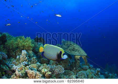 Coral Reef with Emperor Angelfish and Turtle