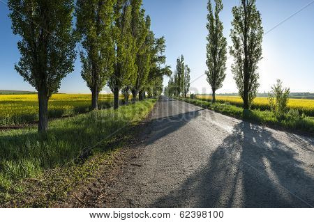 Landscape With Road And Rapeseed Fields