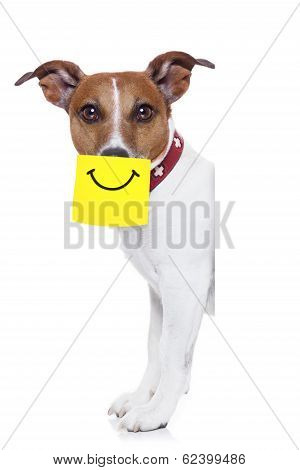 Yellow Not Dog