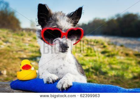 Summer Love Dog