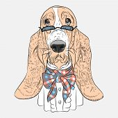 stock photo of hound dog  - dog Basset Hound breed in a glasses and bow tie - JPG