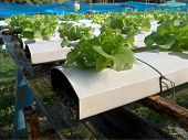 stock photo of hydroponics  - Water system in hydroponic farm in Thailand - JPG