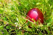 stock photo of ester  - This is Ester photo with Easter eggs - JPG
