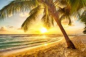 stock photo of calm  - Beautiful sunset over the sea with a view at palms on the white beach on a Caribbean island of Barbados - JPG